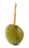 King of fruits, durian long stalk, isolated on white background Royalty Free Stock Image