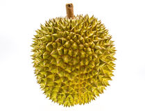 King of fruits, durian Stock Images