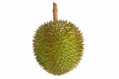 King of fruits famous local durian (Salika) in Phang-nga province, South of Thailand isolated on white background royalty free stock photo