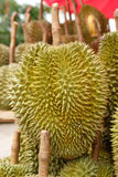King of furit durian from thailand. Durian fruit on the market in thailand Royalty Free Stock Photos