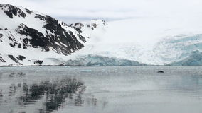 King George Island - Coastline of Antarctica With Ice Formations stock video