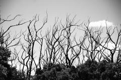 King Lake Trees. Regrowth of trees from King Lake after bushfires Royalty Free Stock Photos