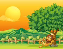 A king lion inside the wooden fence Stock Photos
