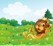 A king lion at the top of the hill Stock Photos