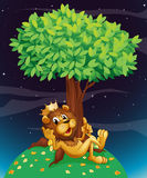 A king lion under a tree Royalty Free Stock Photos