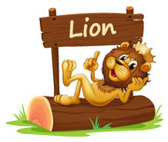 A king lion and the wooden signboard Stock Photo