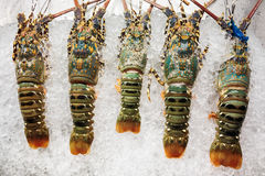 King lobsters on ice Stock Image
