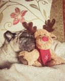 King louie. Relaxing pug puglife Stock Photo