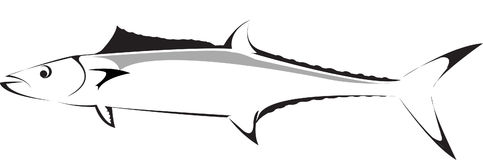 King Mackeral. Illustraion of a king Mackeral also in .ai file royalty free illustration