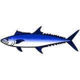 King Mackerel Fish Stock Photo