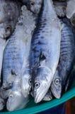 King mackerel (Scomberomorus commerson). Fresh King mackerel (Scomberomorus commerson) at Thailand market Stock Images