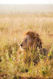 The King - Nairobi National Park - Kenya Stock Photo