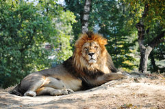 The king o africa Stock Photography