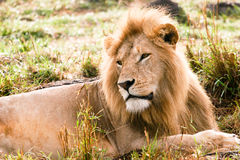 King Of Africa Stock Image