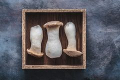 King oyster mushroom in a box, Pleurotus eryngii, on dark background. Copy space royalty free stock photography