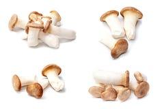King Oyster mushroom (Eringi) isolated on white backgroud. Stock Images