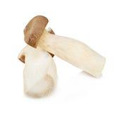 King Oyster mushroom (Eringi) isolated on white backgroud. Stock Photo