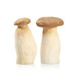 King Oyster mushroom (Eringi) isolated on white backgroud Stock Photo