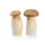 King Oyster mushroom (Eringi) isolated on white backgroud Stock Photos
