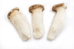 King Oyster Mushroom Stock Photography