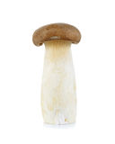 King Oyster mushroom isolated on the white background Royalty Free Stock Photography