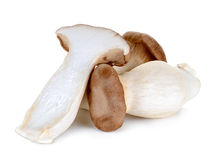 King Oyster mushroom isolated on the white background Stock Image