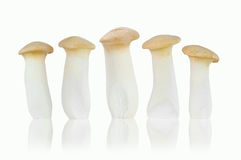 King Oyster mushroom isolated on white background Royalty Free Stock Photography