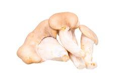 King oyster mushroom Pleurotus eryngii Stock Images