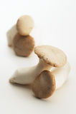 King oyster mushroom Pleurotus eryngii Royalty Free Stock Photography