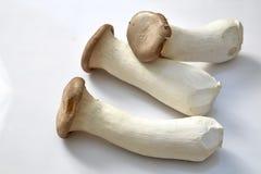 King oyster mushroom Stock Photos