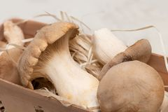 King Oyster Mushroom on wooden background. Pleurotus eryngii.  royalty free stock images