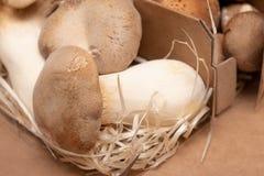 King Oyster Mushroom on wooden background. Pleurotus eryngii.  royalty free stock photo