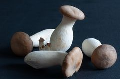 King Oyster mushrooms Stock Photography
