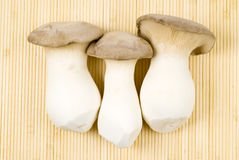 King Oyster Mushrooms royalty free stock photo