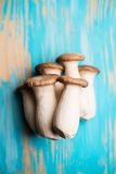 King oyster mushrooms on blue backgrouns Stock Images