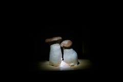 King Oyster Mushrooms Stock Photo