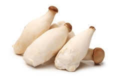 King oyster mushrooms Royalty Free Stock Photography