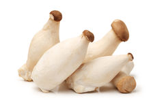 King oyster mushrooms Stock Photo