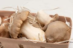 King Oyster Mushrooms on wooden background. Pleurotus eryngii.  royalty free stock images