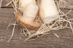 King Oyster Mushrooms on wooden background. Pleurotus eryngii.  stock image