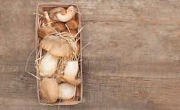 King Oyster Mushrooms on wooden background. Pleurotus eryngii.  royalty free stock photo