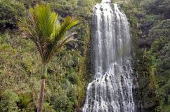 King Palm tree and Karekare Falls New Zealand Stock Photo