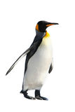 King Penguin. Isolated on white background