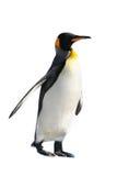 King Penguin. Isolated on white background Royalty Free Stock Photo