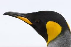 King penguin (Aptenodytes patagonicus) Stock Image