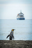 King penguin on beach with ship behind Stock Image