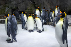 King penguin colony Stock Photo