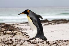 King Penguin walking on the beach Royalty Free Stock Photos