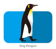 King Penguin walking, Penguin seed series. Vector illustration Stock Photos