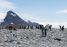 King Penguins and South American Fur Seals on a Rocky Beach. A group of king penguins and South American fur seals, including a sleeping seal pup, on a rocky Royalty Free Stock Photo
